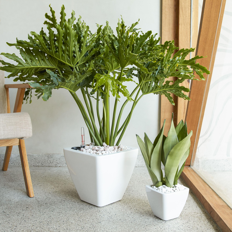 Square Cone Planter