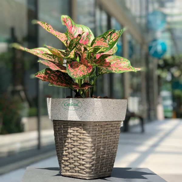 White Sand - Weaved Flat Planter Square
