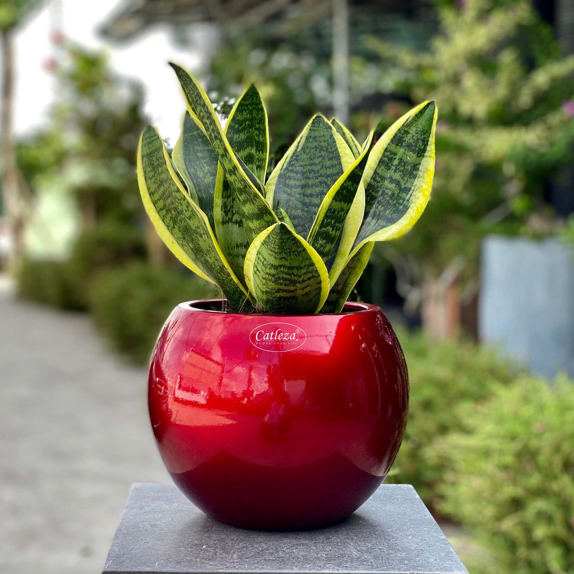 Globular Planter