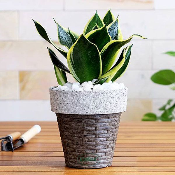 White Sand - Weaved Flat Planter Round