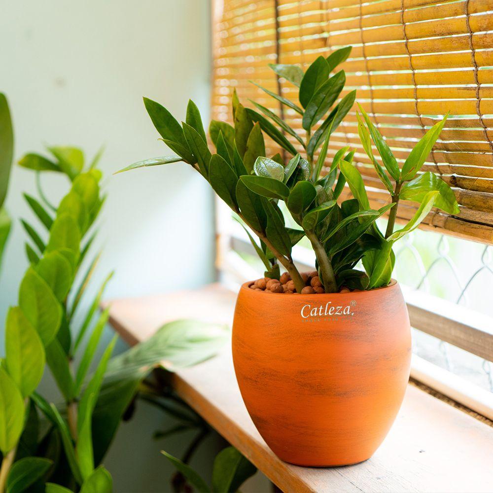 Elipse Planter
