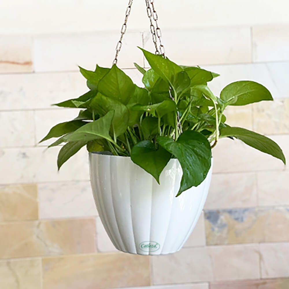 Hanging Planter 2