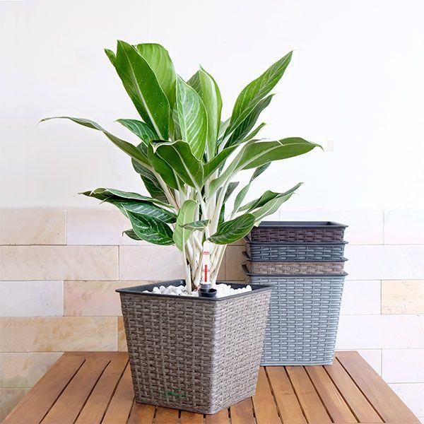 Thin Wicker Planter - Weaved Flat Planter Round 2