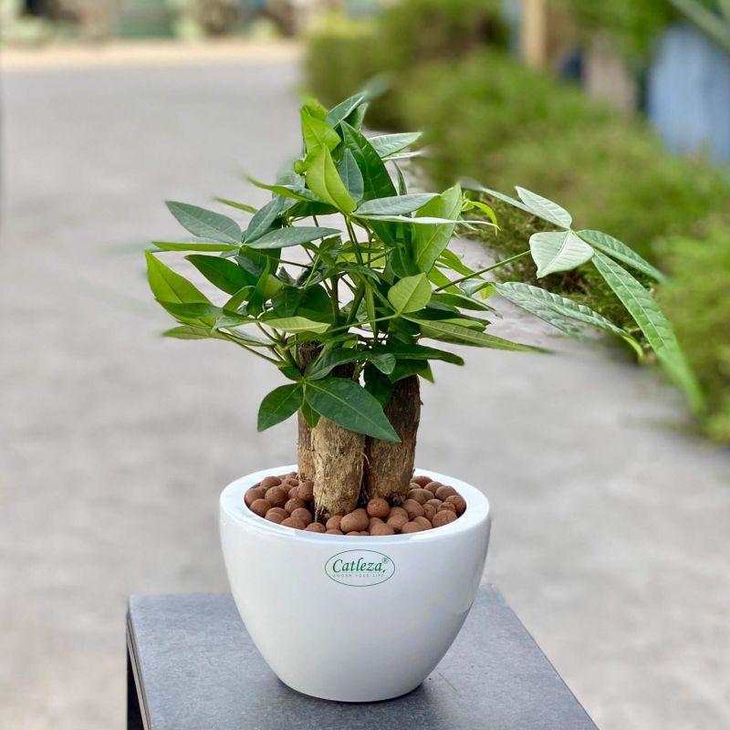 Round Cone Planter 2